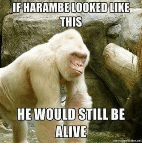 Alive, Meme, and Memes: IFHARAMBE LOOKED LIKE  THIS  HE WOULD STILL BE  ALIVE  meme generator net