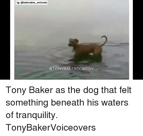Animals, Memes, and Comedy: ig: adorable animals  TONY BAKER COMEDY Tony Baker as the dog that felt something beneath his waters of tranquility. TonyBakerVoiceovers