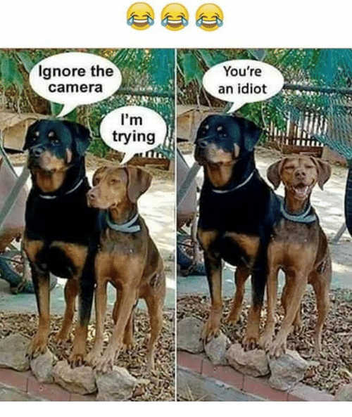 Idiotness: Ignore the  Camera  I'm  trying  You're  an idiot