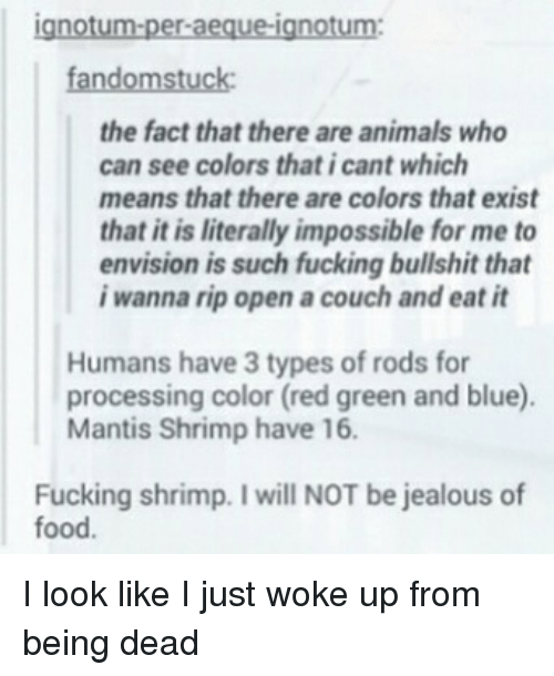 Animals, Food, and Fucking: ignotum-per-aeque-ignotum:  fandomstuck  the fact that there are animals who  can see colors that i cant which  means that there are colors that exist  that it is literally impossible for me to  envision is such fucking bullshit that  iwanna rip open a couch and eat it  Humans have 3 types of rods for  processing color (red green and blue).  Mantis Shrimp have 16.  Fucking shrimp. I will NOT be jealous of  food. I look like I just woke up from being dead