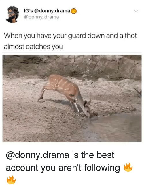 Funny, Thot, and Best: IG's @donny.drama  @donny_drama  When you have your guard down and a thot  almost catches you @donny.drama is the best account you aren't following 🔥🔥