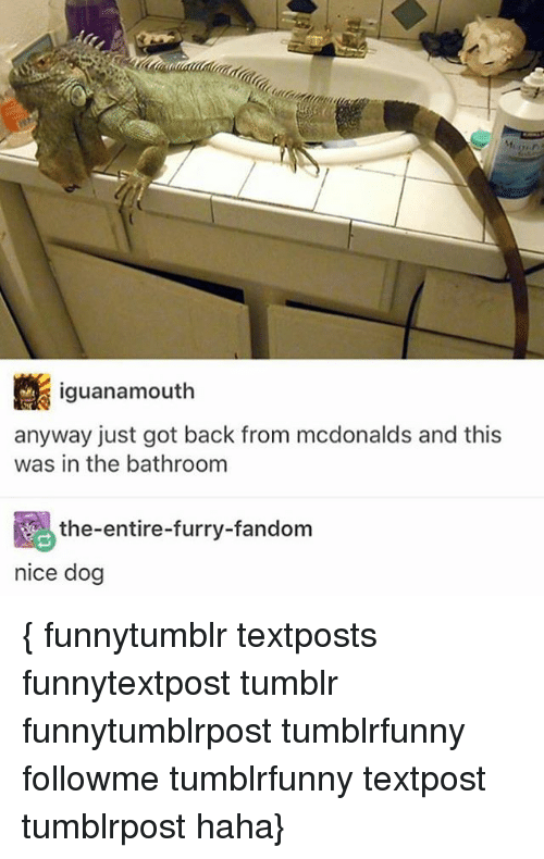 furry fandom: iguanamouth  anyway just got back from mcdonalds and this  was in the bathroom  the-entire-furry-fandom  nice dog { funnytumblr textposts funnytextpost tumblr funnytumblrpost tumblrfunny followme tumblrfunny textpost tumblrpost haha}