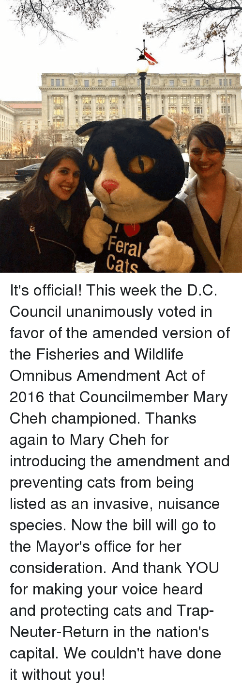 Memes, Trap, and Trapping: ijil  Feral  Cats It's official! This week the D.C. Council unanimously voted in favor of the amended version of the Fisheries and Wildlife Omnibus Amendment Act of 2016 that Councilmember Mary Cheh championed.    Thanks again to Mary Cheh for introducing the amendment and preventing cats from being listed as an invasive, nuisance species. Now the bill will go to the Mayor's office for her consideration.  And thank YOU for making your voice heard and protecting cats and Trap-Neuter-Return in the nation's capital. We couldn't have done it without you!