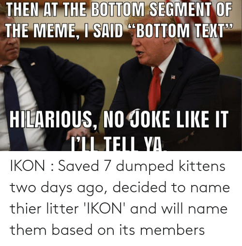 ikon: IKON : Saved 7 dumped kittens two days ago, decided to name thier litter 'IKON' and will name them based on its members