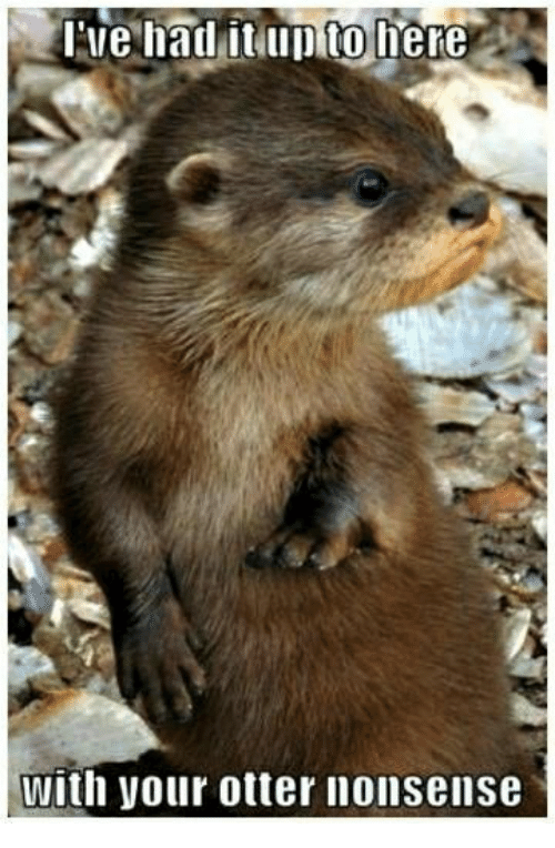 otter nonsense: Ilie had it Illo to  here  with your otter nonsense