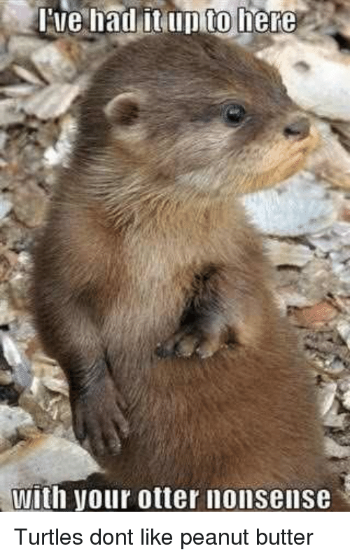 otter nonsense: Ilie had it up to here  with your otter nonsense Turtles dont like peanut butter