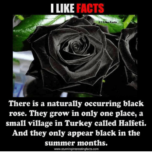 There is a black rose pictures to pin on pinterest thepinsta for Do black roses really exist