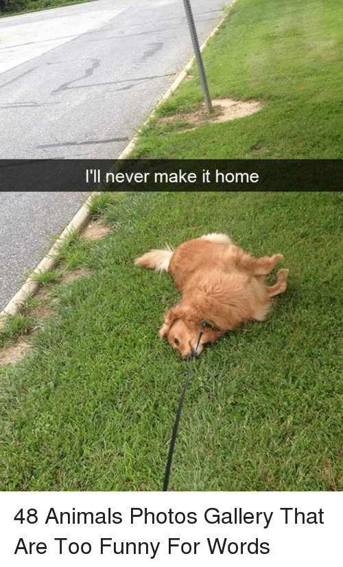 Animals, Funny, and Home: I'll never make it home 48 Animals Photos Gallery That Are Too Funny For Words