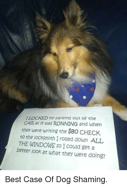 Better Look: ILOCKED my parents out Of the  CAR as it was RUNNING and when  they were writing the $80 CHECK  to the locksmith I rolled down ALL  THE WINDOWS so I Could get a  better look at what they were doing? <p>Best Case Of Dog Shaming.</p>