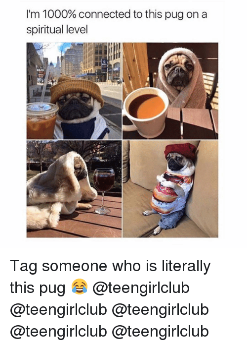 Girl, Pug, and Level: I'm 1000% connected to this pug on a  spiritual level Tag someone who is literally this pug 😂 @teengirlclub @teengirlclub @teengirlclub @teengirlclub @teengirlclub