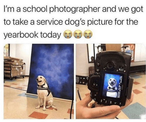 Yearbook: I'm a school photographer and we got  to take a service dog's picture for the  yearbook today