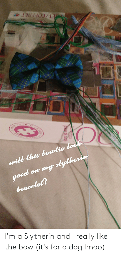 Slytherin: I'm a Slytherin and I really like the bow (it's for a dog lmao)