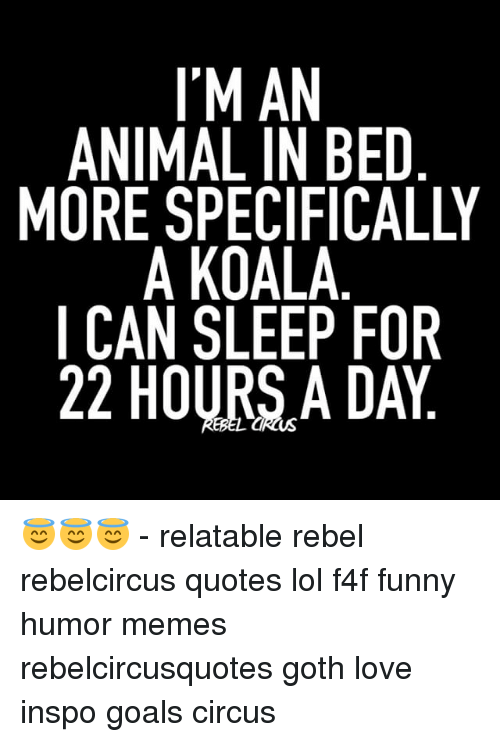 Koalaing: I'M AN  ANIMAL IN BED  MORE SPECIFICALLY  A KOALA  CAN SLEEP FOR  22 HOURSA DAY 😇😇😇 - relatable rebel rebelcircus quotes lol f4f funny humor memes rebelcircusquotes goth love inspo goals circus