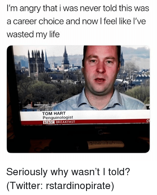 Funny, Life, and Meme: I'm angry that i was never told this was  a career choice and now I feel like l've  wasted my life  TOM HART  Penguinologist  BBC BREAKFAST Seriously why wasn't I told? (Twitter: rstardinopirate)