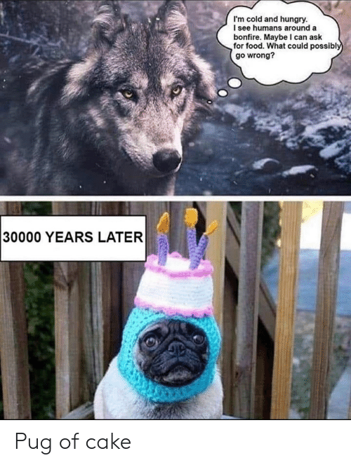 pug: I'm cold and hungry.  I see humans around a  bonfire. Maybe I can ask  for food. What could possibly  go wrong?  30000 YEARS LATER Pug of cake