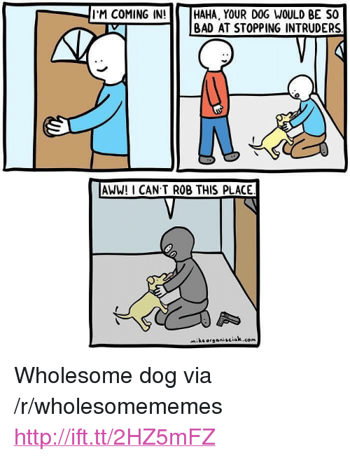 "Aww, Bad, and Http: I'M COMING IN! ||| HAHA, YOUR DOG WOULD BE SO  | BAD AT STOPPING INTRUDERS  AWW! I CAN T ROB THIS PLACE  miksorganisciak.com <p>Wholesome dog via /r/wholesomememes <a href=""http://ift.tt/2HZ5mFZ"">http://ift.tt/2HZ5mFZ</a></p>"