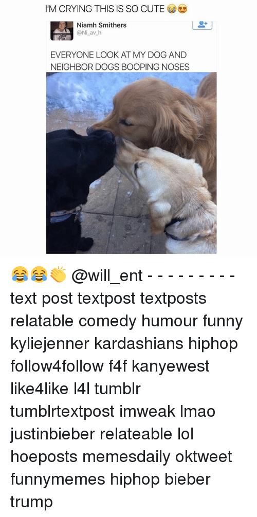 Memes, Neighbors, and 🤖: I'M CRYING THIS IS SO CUTE  Niamh Smithers  ONi av h  EVERYONE LOOK AT MY DOG AND  NEIGHBOR DOGS BOOPING NOSES 😂😂👏 @will_ent - - - - - - - - - text post textpost textposts relatable comedy humour funny kyliejenner kardashians hiphop follow4follow f4f kanyewest like4like l4l tumblr tumblrtextpost imweak lmao justinbieber relateable lol hoeposts memesdaily oktweet funnymemes hiphop bieber trump