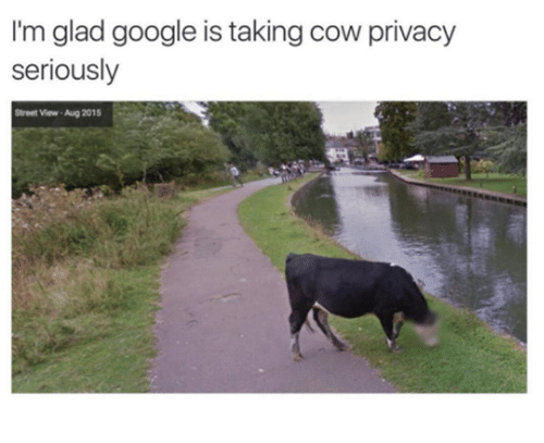 Dank, Google, and Streets: I'm glad google is taking cow privacy  seriously  Street View-Aug 2015
