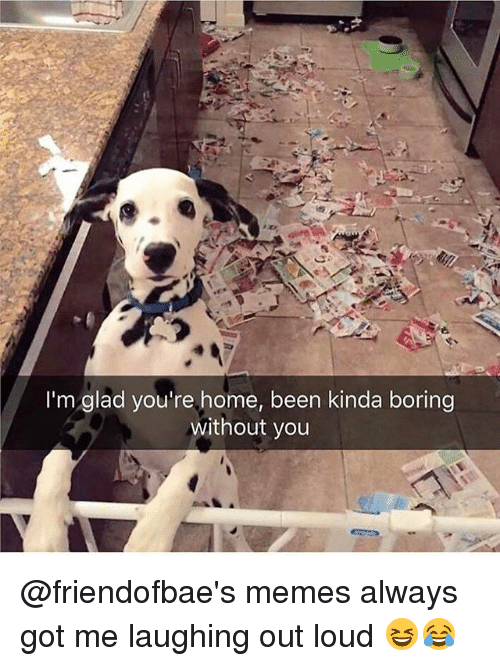 Memes, Home, and Been: I'm glad you're home, been kinda boring  without you @friendofbae's memes always got me laughing out loud 😆😂