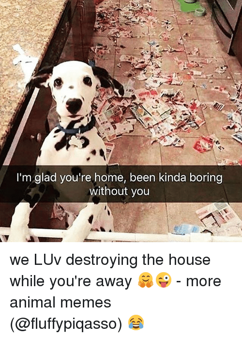 Memes, Animal, and Home: I'm glad you're home, been kinda boring  without you we LUv destroying the house while you're away 🤗😜 - more animal memes ➞ (@fluffypiqasso) 😂
