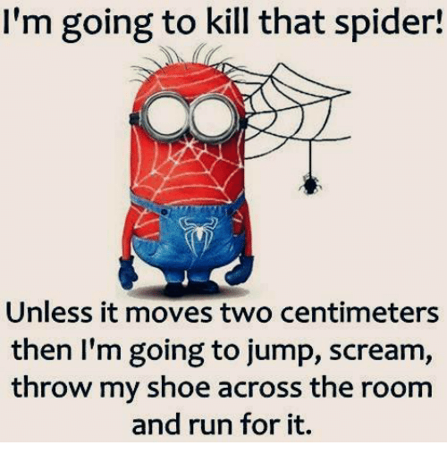 how to kill a spider in your room