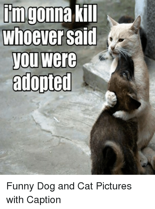 Quotes About Cats And Dogs Together