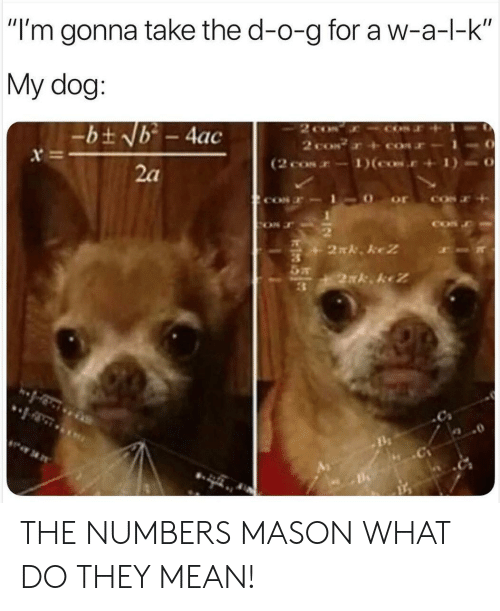 """a&w: """"I'm gonna take the d-o-g for a w-a-l-k  My dog:  2 co  2 coN  (2 cos-1)(cos.  -bt Nb - 4ac  x  2a  2N. keZ  2xk keZ THE NUMBERS MASON WHAT DO THEY MEAN!"""