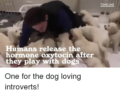 Dogs And Humans The Love Hormone