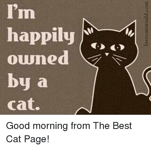 Best Cat: I'm  happily  owned  by a  Cat. Good morning from The Best Cat Page!