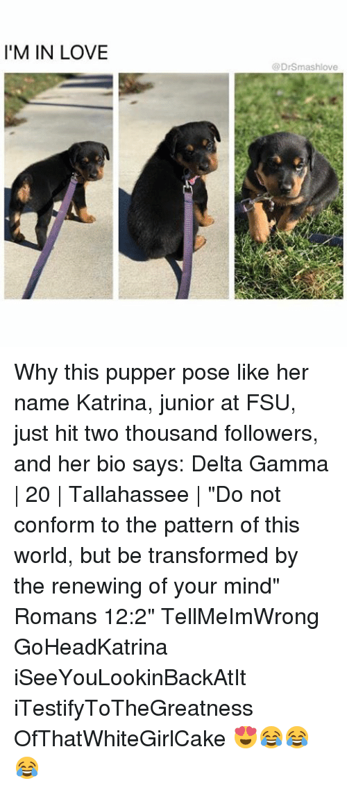 "FSU Florida State University: I'M IN LOVE  @DrSmas hlove Why this pupper pose like her name Katrina, junior at FSU, just hit two thousand followers, and her bio says: Delta Gamma | 20 | Tallahassee | ""Do not conform to the pattern of this world, but be transformed by the renewing of your mind"" Romans 12:2"" TellMeImWrong GoHeadKatrina iSeeYouLookinBackAtIt iTestifyToTheGreatness OfThatWhiteGirlCake 😍😂😂😂"