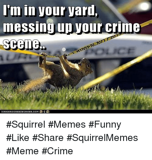 im in your yard messing up your crime scene squirrel