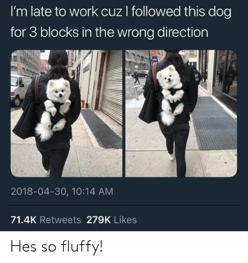 Late To Work: I'm late to work cuz I followed this dog  for 3 blocks in the wrong direction  2018-04-30, 10:14 AM  71.4K Retweets 279K Likes Hes so fluffy!