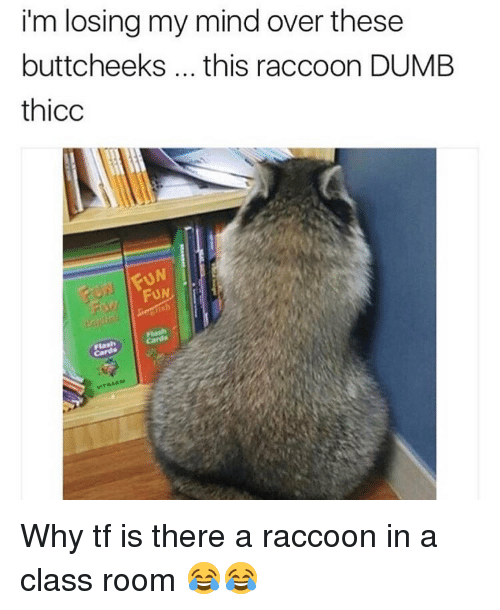 I'm Losing My Mind Over These Buttcheeks This Raccoon DUMB ...