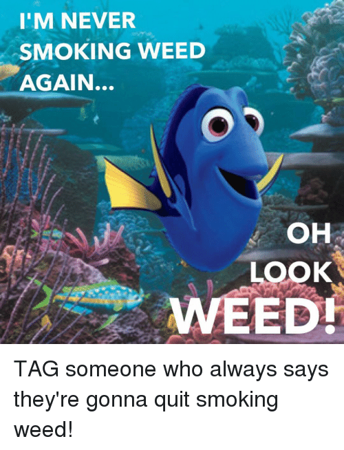 Smoking, Weed, and Marijuana: I'M NEVER  SMOKING WEED  AGAIN...  OH  LOOK  WEED! TAG someone who always says they're gonna quit smoking weed!
