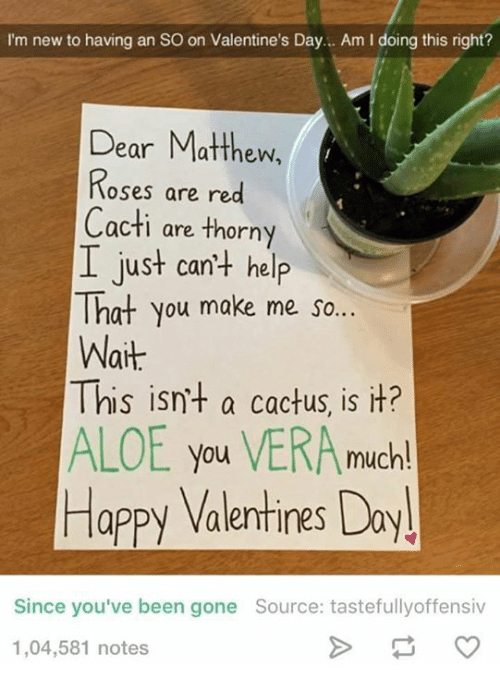 Cactie: I'm new to having an so on Valentine's Day... Am l doing this right?  Dear Matthew,  Roses are red  Cacti are thorny  I just can't help  That you make me so...  Wait  This isn't a cactus, is it?  ALOE you VERA much!  Happy Valentines Day  Since you've been gone Source: tastefullyoffensiv  1,04,581 notes
