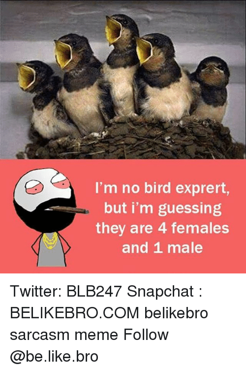 and 1: I'm no bird exprert,  but i'm guessing  they are 4 females  and 1 male Twitter: BLB247 Snapchat : BELIKEBRO.COM belikebro sarcasm meme Follow @be.like.bro