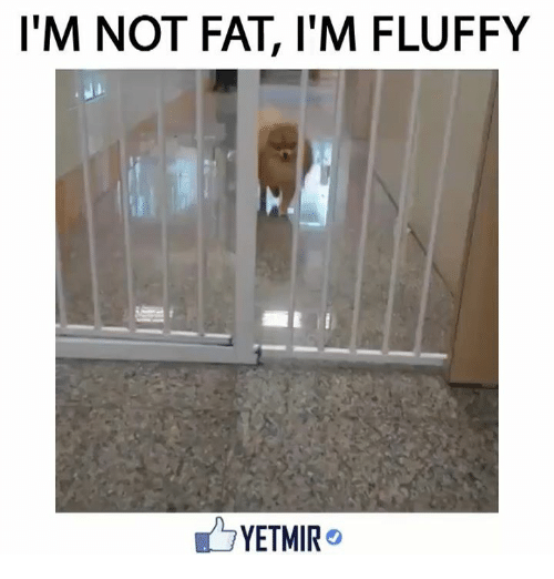 Fluffiness: I'M NOT FAT, l'M FLUFFY  YETMIR