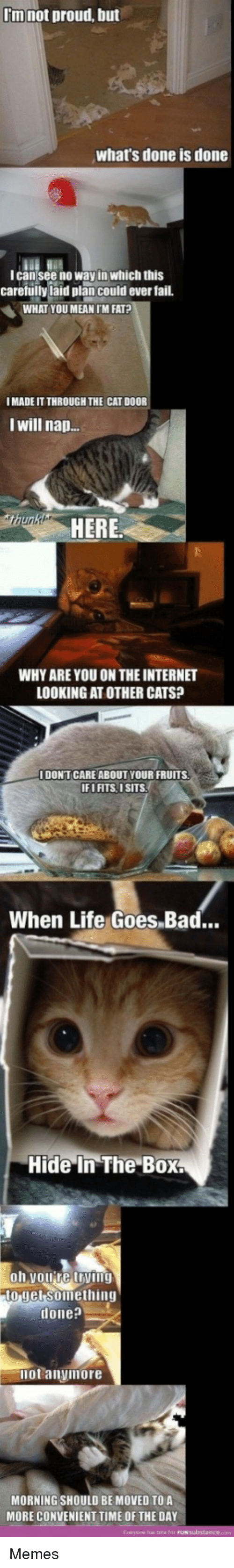Im Fat: I'm not proud, but  what's done is done  lcan see no way in which this  carefullyiaid plan could ever fail.  WHAT YOU MEAN IM FAT?  I MADE IT THROUGH THE CAT DOOR  I will nap.  HERE  WHY ARE YOU ON THE INTERNET  LOOKING AT OTHER CATS?  I DONTCARE ABOUT YOUR FRUITS  IFI FITS, 1SITS  When Life Goes.Bad..  Hide In The Box  o jet Soimething  done?  not anyimore  MORNING SHOULD BE MOVED TO A  MORE CONVENIENT TIME OF THE DAY  Eviryona has tane for Memes