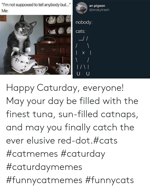 "tuna: ""I'm not supposed to tell anybody but..""  an pigeon  @imskytrash  Me:  nobody:  cats:  L/  U U Happy Caturday, everyone! May your day be filled with the finest tuna, sun-filled catnaps, and may you finally catch the ever elusive red-dot.#cats #catmemes #caturday #caturdaymemes #funnycatmemes #funnycats"
