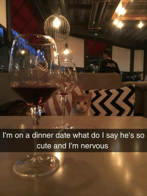 dinner date: I'm on a dinner date what do I say he's so  cute and I'm nervous