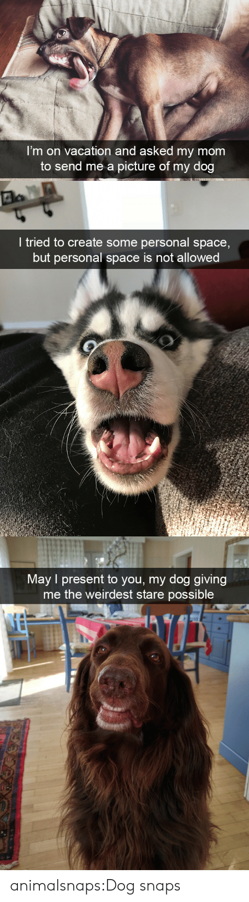 Personal Space: I'm on vacation and asked my mom  to send me a picture of my dog   I tried to create some personal space,  but personal space is not allowed   Mav I present to you, my dog giving  me the weirdest stare possible animalsnaps:Dog snaps