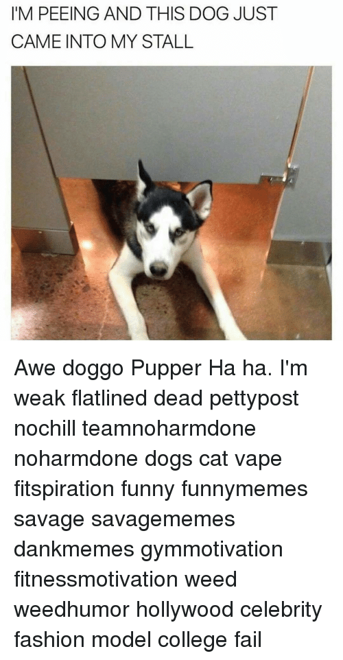 awe: IM PEEING AND THIS DOG JUST  CAME INTO MY STALL Awe doggo Pupper Ha ha. I'm weak flatlined dead pettypost nochill teamnoharmdone noharmdone dogs cat vape fitspiration funny funnymemes savage savagememes dankmemes gymmotivation fitnessmotivation weed weedhumor hollywood celebrity fashion model college fail
