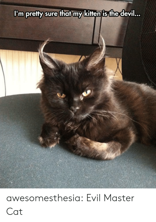 im-pretty-sure: I'm pretty sure that my kitten is the devil... awesomesthesia:  Evil Master Cat
