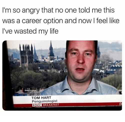 Life, Breakfast, and Angry: I'm so angry that no one told me this  was a career option and now I feel like  I've wasted my life  TOM HART  Penguinologist  BBC BREAKFAST