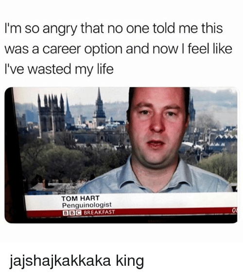 Life, Breakfast, and Angry: I'm so angry that no one told me this  was a career option and now I feel like  I've wasted my life  TOM HART  Penguinologist  BBC BREAKFAST  0 jajshajkakkaka king