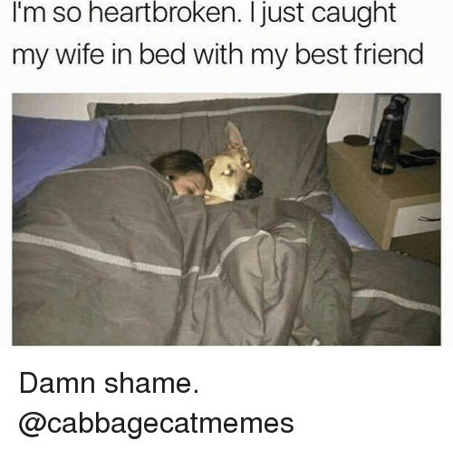 Best Friend, Funny, and Girl Memes: I'm so heartbroken. I just caught  my wife in bed with my best friend Damn shame. @cabbagecatmemes