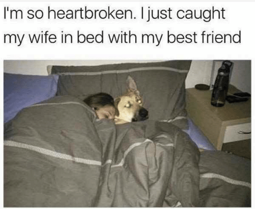 Dank and 🤖: I'm so heartbroken. just caught  my wife in bed with my best friend