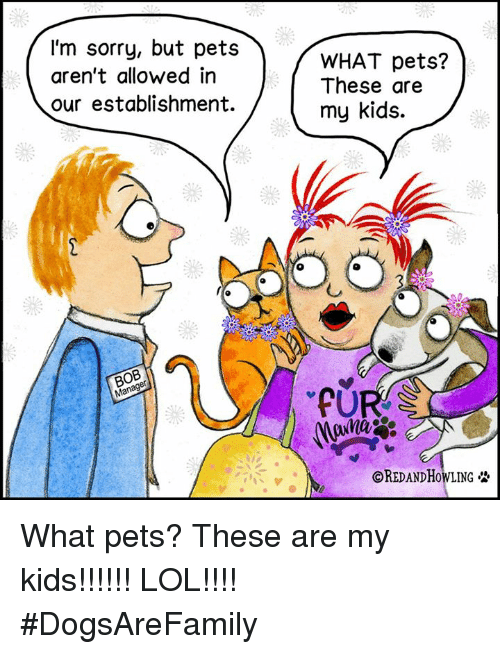 Lol, Memes, and Sorry: I'm sorry, but pets  aren't allowed in  our establishment.  BOB  Man  WHAT pets?  These are  my kids.  OREDANDHowLING What pets? These are my kids!!!!!! LOL!!!! #DogsAreFamily