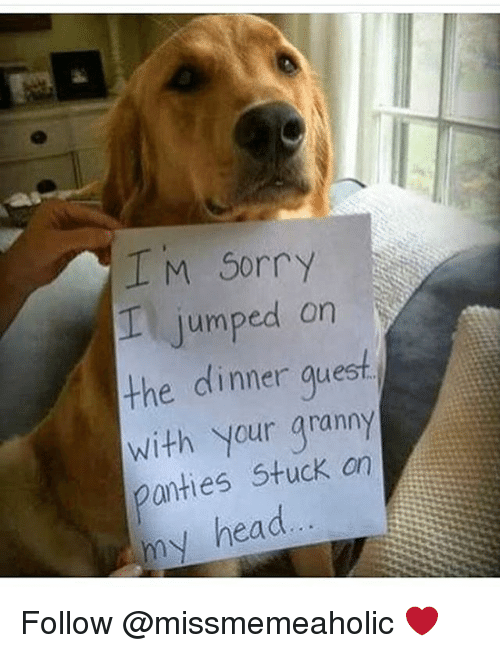Head, Memes, and Sorry: IM Sorry  I jumped on  the dinner guesf  with your granny  anties Stuck an  my head Follow @missmemeaholic ❤️