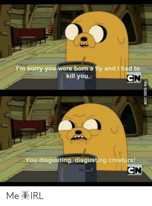 Via 9Gag Com: I'm sorry youwere born a fly and I had to  kill you  CN  You disgusting, disgusting creature!  CN  VIA 9GAG.COM Me🦟IRL